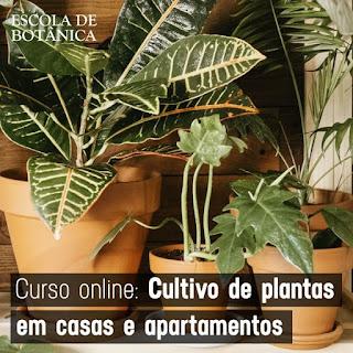 Curso Online de Cultivo de Plantas em Casas e Apartamentos