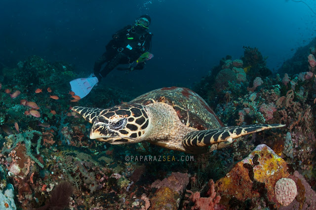 Learn Scuba Diving, Padi, Underwater Photography