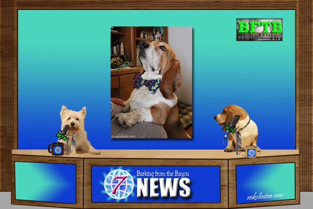 BFTB NETWoof News with dog in bowtie