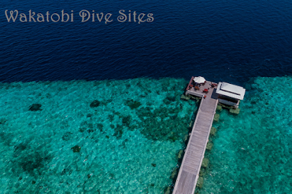 43 Lokasi Menyelam di Wakatobi Indonesia - Dive Sites