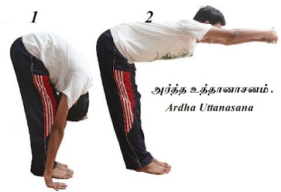 Ardha Uttanasana first and second step