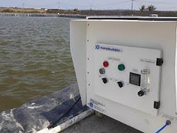 Teknologi Nanobubble, Solusi Cerdas untuk Perikanan