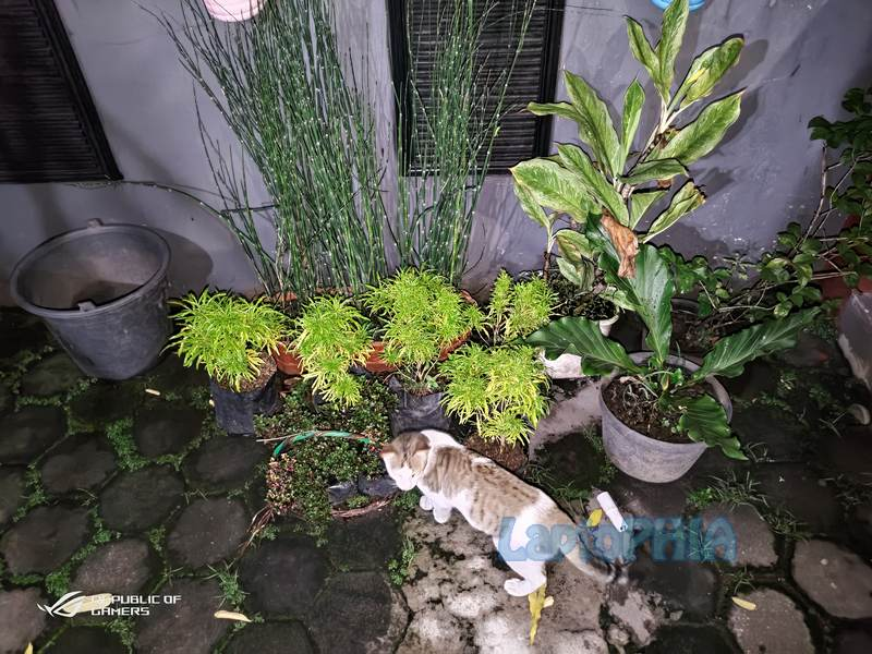Hasil Foto Kamera Asus ROG Phone 3 ZS661KS