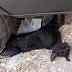 Ανθρωποειδες δίποδο πάρκαρε το αυτοκίνητο του πάνω σε ένα ζωντανό γατάκι