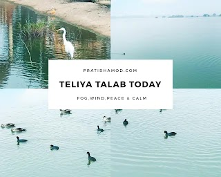 Teliya Talab Today At 11 AM, Dense Fog, Birds And Peaceful