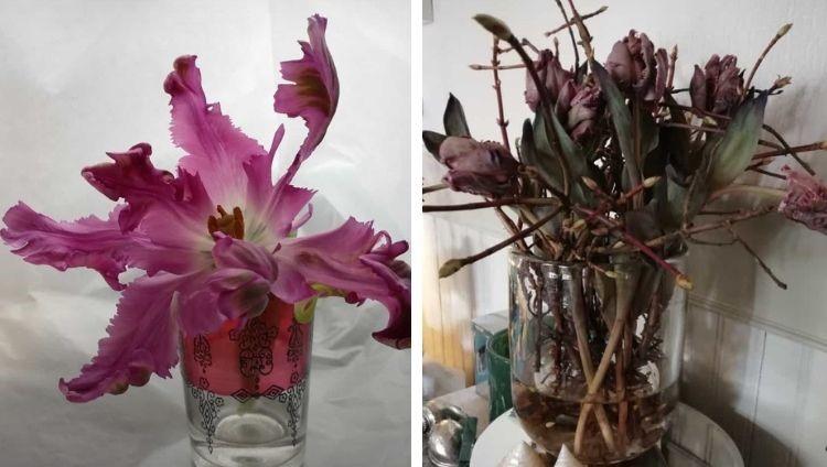 Blumendeko mit Tulpen