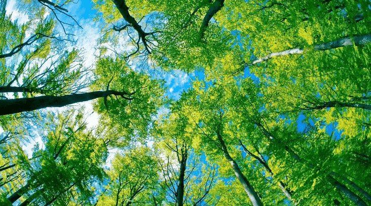 Pengertian Lingkungan Berdasarkan keterangan dari Para Ahli dan Definisinya