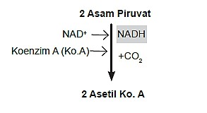 Skema Dekarboksilasi Oksidatif