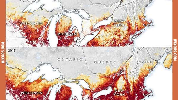Ticks survival in Canada