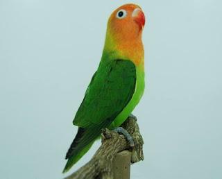 lovebird ngekek panjang mp3,pakan lovebird agar ngekek panjang,cara merawat lovebird biar cepat ngekek panjang,lovebird ngekek panjang si lamborgini di rumah,lovebird gacor jantan atau betina,