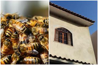 https://vnoticia.com.br/noticia/4236-cinco-pessoas-atacadas-por-abelhas-na-praia-de-guaxindiba