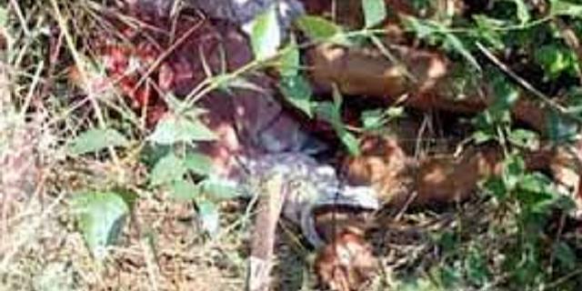 कूडर के जंगल में मिली युवक की सिर कुचली लाश, जानवर नोंच रहे थे | JABALPUR NEWS