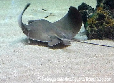 Seaport Aquarium on the Wildwood Boardwalk in Wildwood, New Jersey