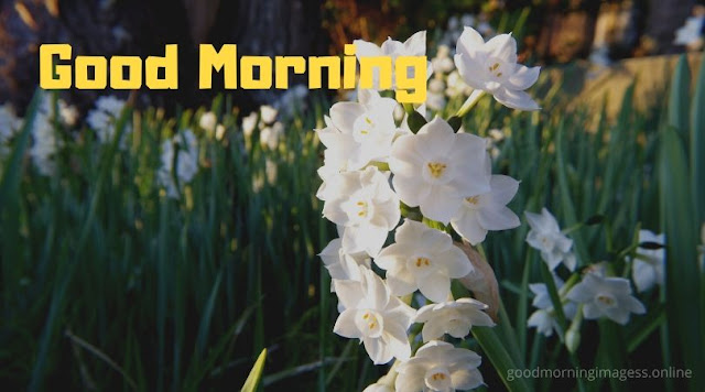 Good Morning Images With White Flowers
