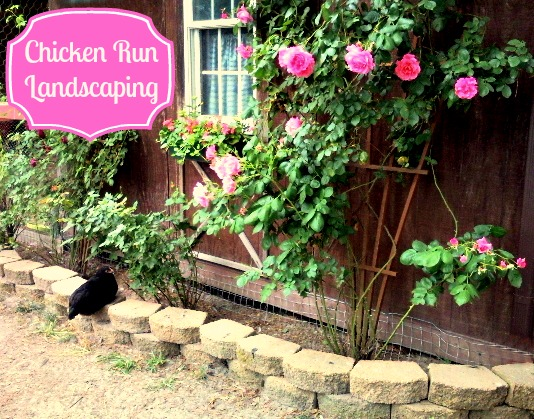 Chicken Run Landscaping | Fresh Eggs Daily®