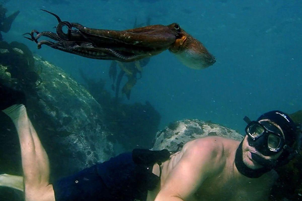 Picanha Cultural: Picanha.doc - Professor Polvo (My Octopus Teacher)