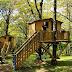 Biccari. Una vacanza immersa nel verde. Daunia Avventura con i BIC ti fa dormire in una casa sull'albero