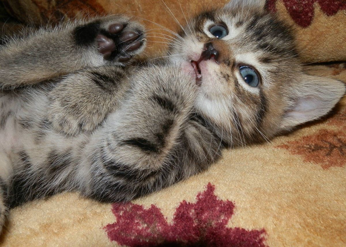 Funny cats - part 29 (25 pics + 5 gifs) | Amazing Creatures