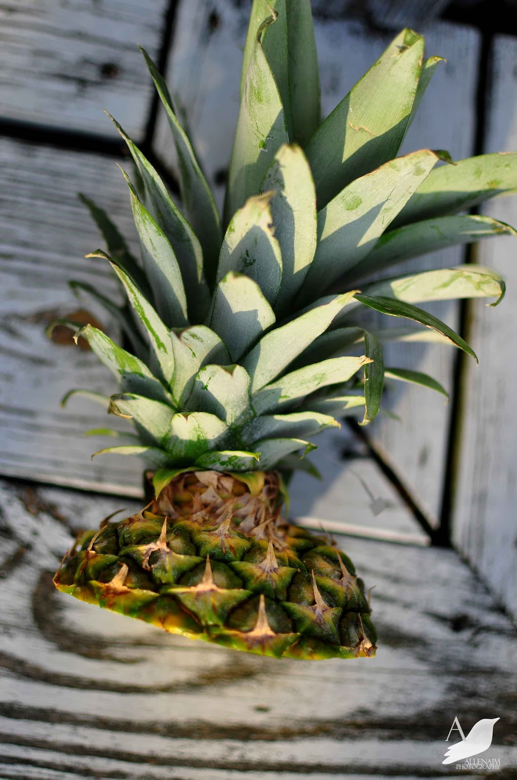 how to plant a supermarket pineapple top easy
