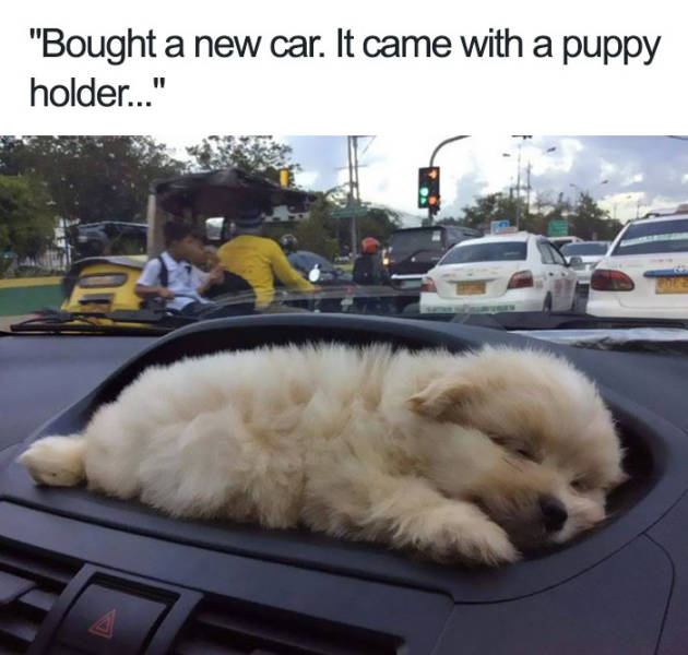 Bought a new car. It came with a puppy holder.