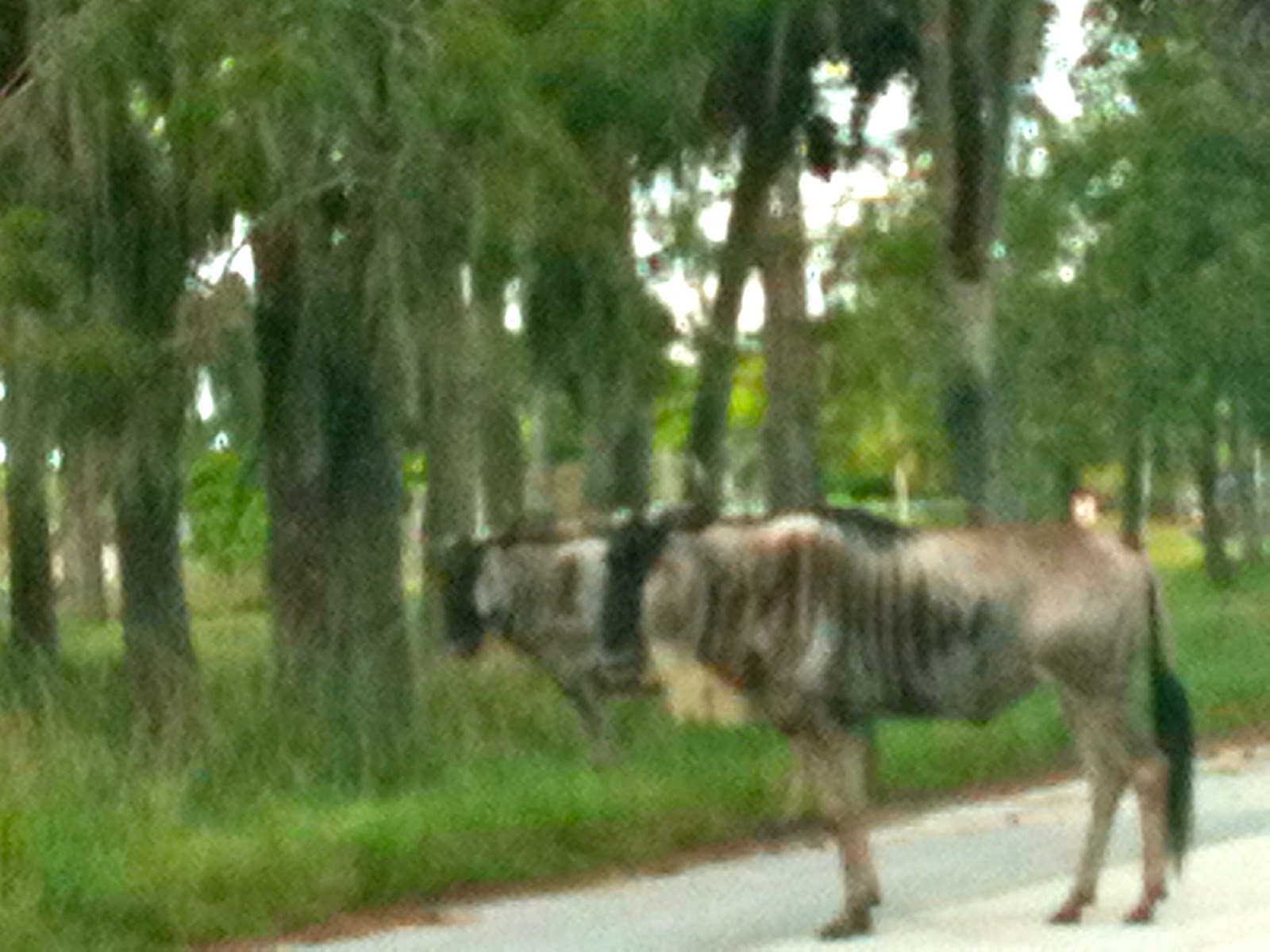 Lion Country Safari, Loxahatchee, FL - ouroutdoortravels.blogspot.com