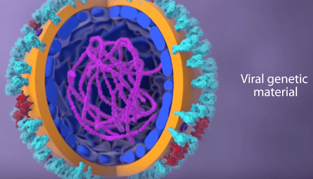 structure of coronavirus with genetic material