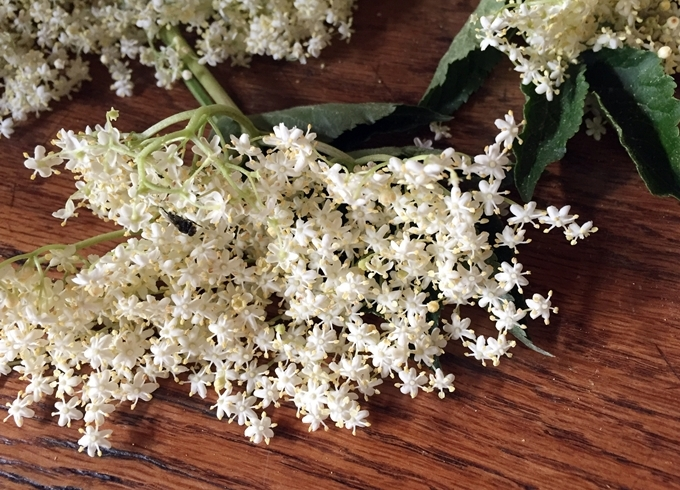 Flor de saúco