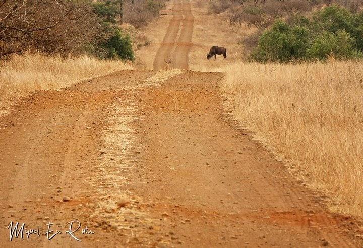 Caminos-en-Sabie-River-Parque-Kruger