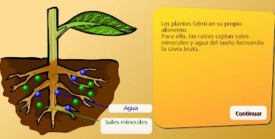 http://www.primaria.librosvivos.net/archivosCMS/3/3/16/usuarios/103294/9/5EP_Cono_cas_ud4_186/frame_prim.swf