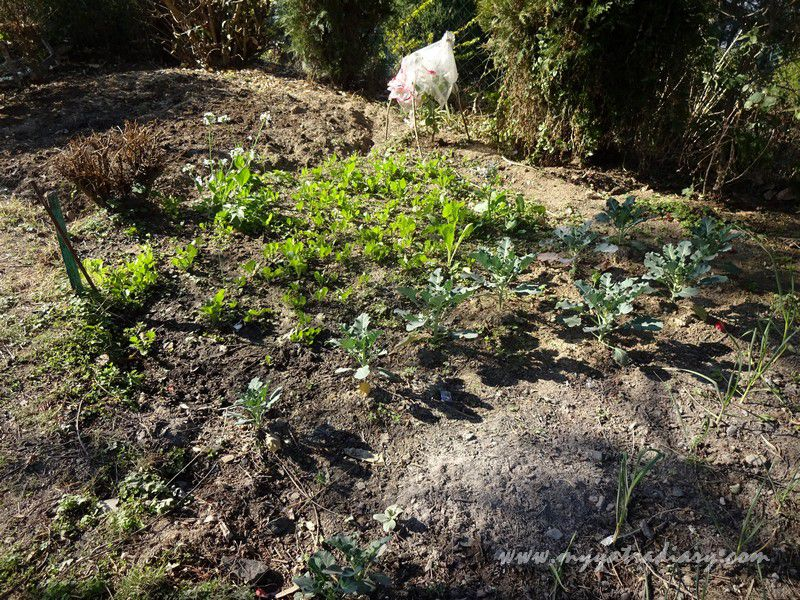Fresh Organic produce at The Himalayan Bungalow Boutique homestay Almora