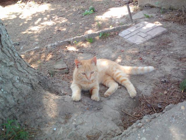 Rijko Cat 1