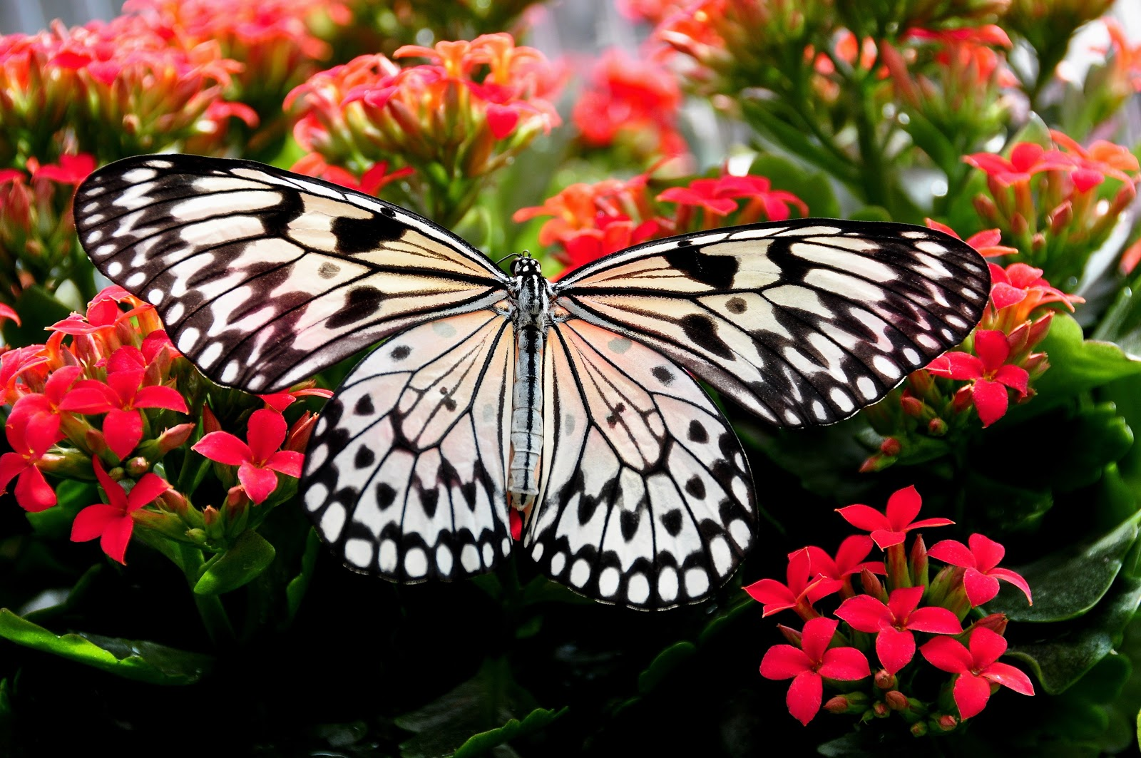 beautiful-bloom-blooming-blossom-butterfly-pictures