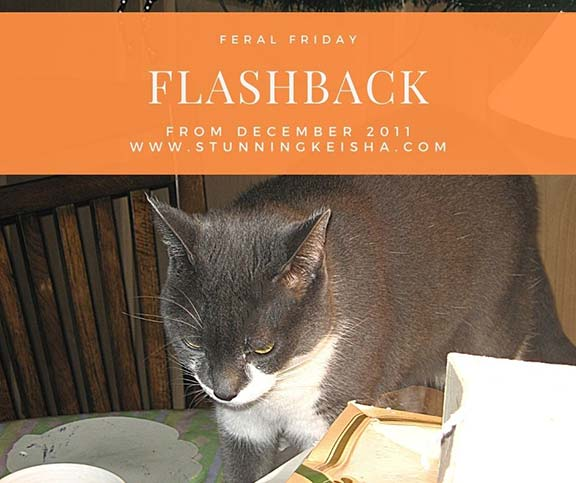 Feral Friday Funny Flashback