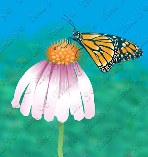 https://www.canstockphoto.ca/monarch-butterfly-set-1-extra-79117170.html
