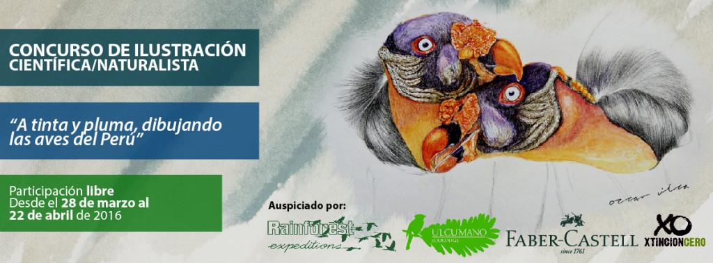 Las aves en la ilustración naturalista en el Perú | Aves, Ecología y ...