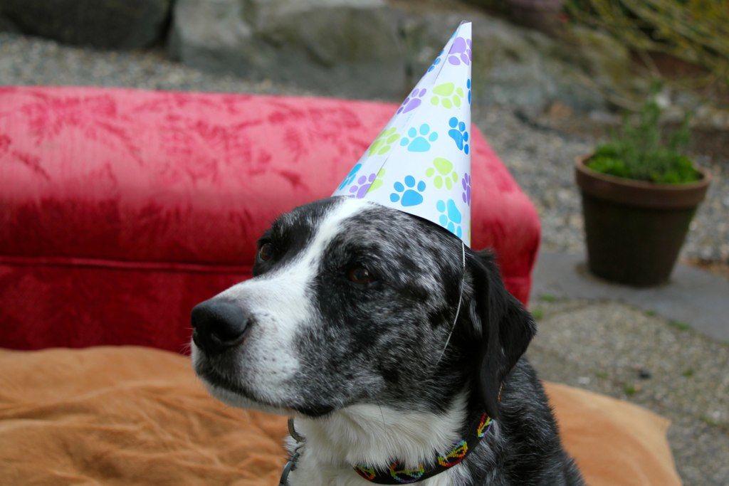 DOG PARTY!: happy birthday blue dog homemade meme