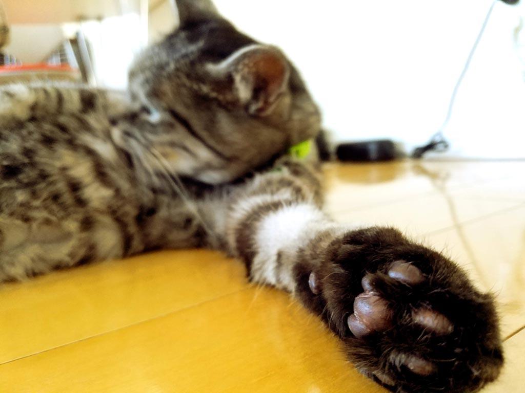 猫 こう もん の うえん 画像
