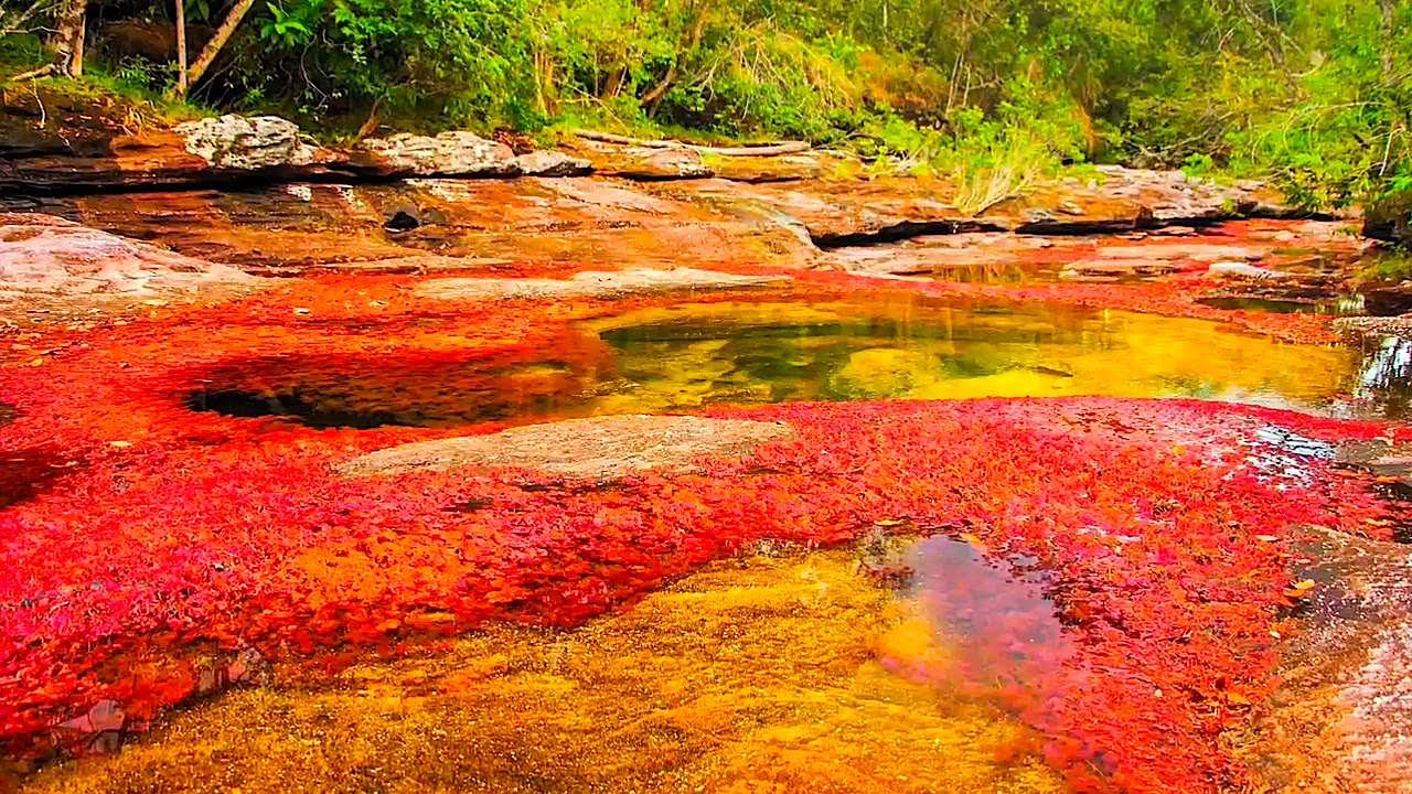 Maravilla Natural Surrealista, Caño Cristales, Colombia 2