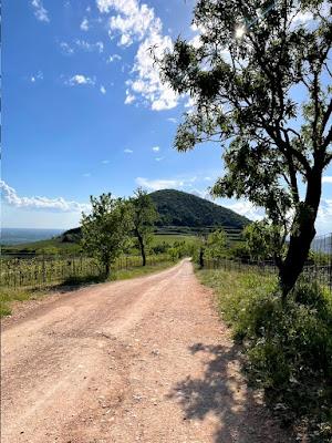 Colli Euganei - Monte Fasolo