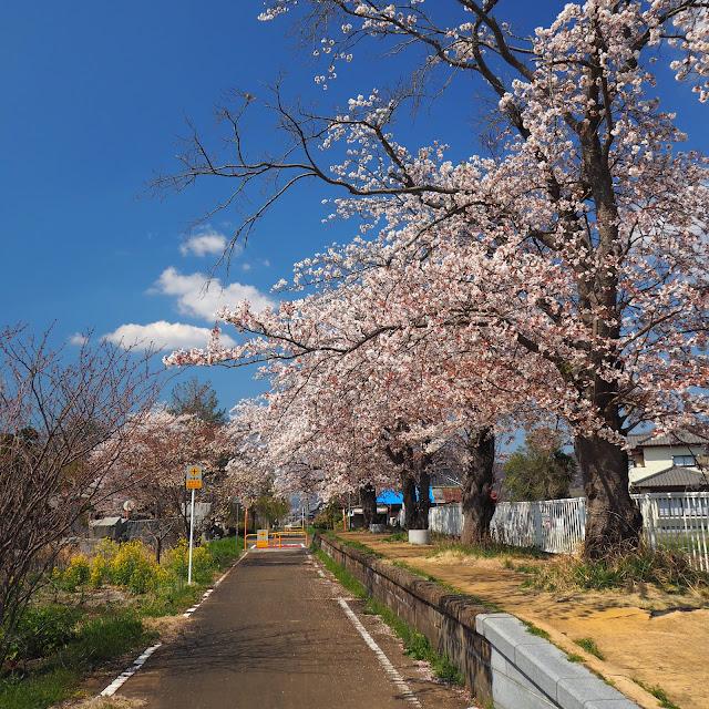 りんりんロード  東飯田駅跡