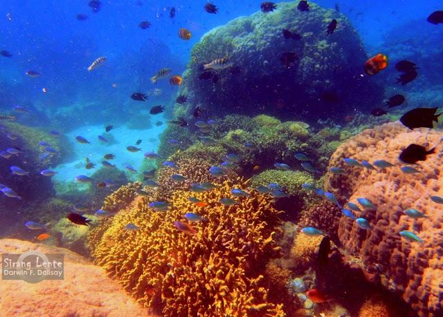 Tourist Spots in Mindoro