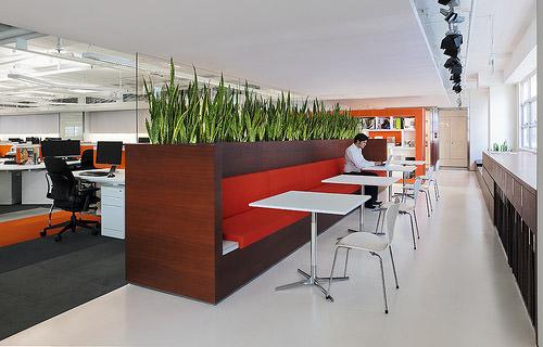 зеленые растения в интерьере офиса