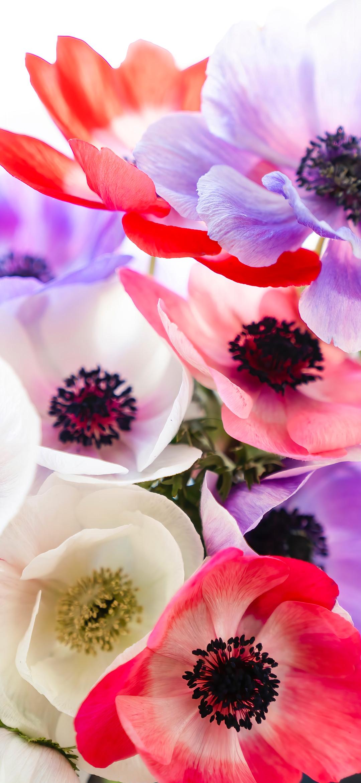 خلفية باقة أزهار جميلة رائعة الألوان