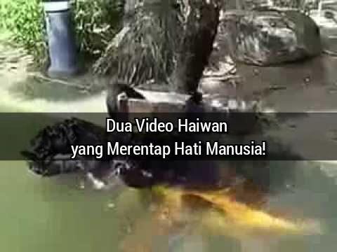 Dua Video Haiwan yang Merentap Hati Manusia!