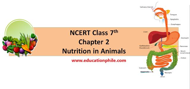 NCERT Class 7th Science Nutrition in Animals, NCERT Free solution, Nutirion in Animals, solution of NCERT 7th class, UPSC, CTET CTET TGT, CTET Paper-II, Science content