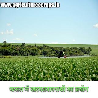 फसल में खरपतवारनाशी का प्रयोग करते समय ध्यान देने योग्य सावधानियाँ,Precautions to be taken while using weedicides in the crops