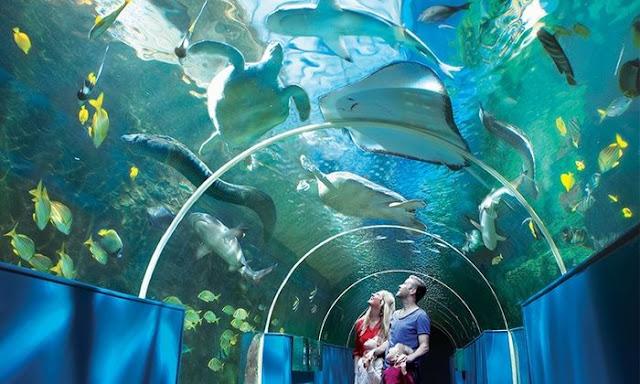 Cebu Ocean Park Philippines