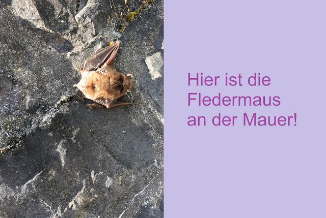 Fledermaus an Steinmauer