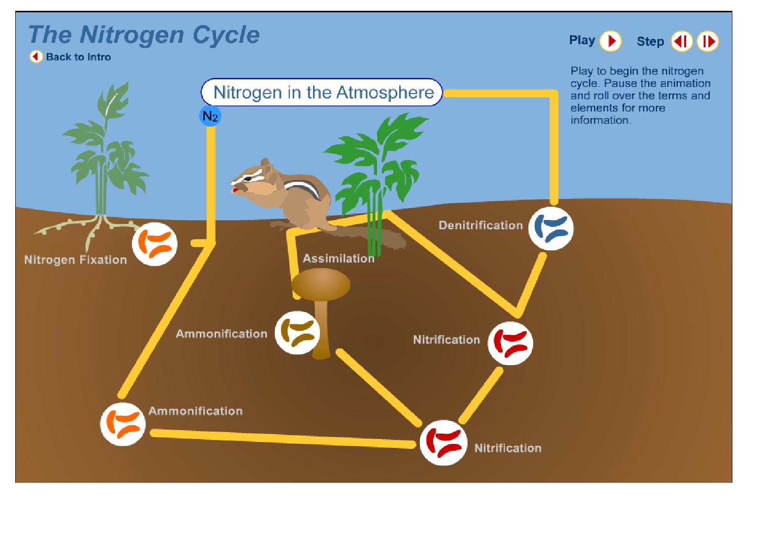 complicated water cycle diagram chevy cobalt starter wiring nitrogen biogeochemical