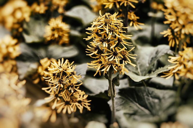 Pori, Visualaddict, valokuvaaja, Frida Steiner, kukka